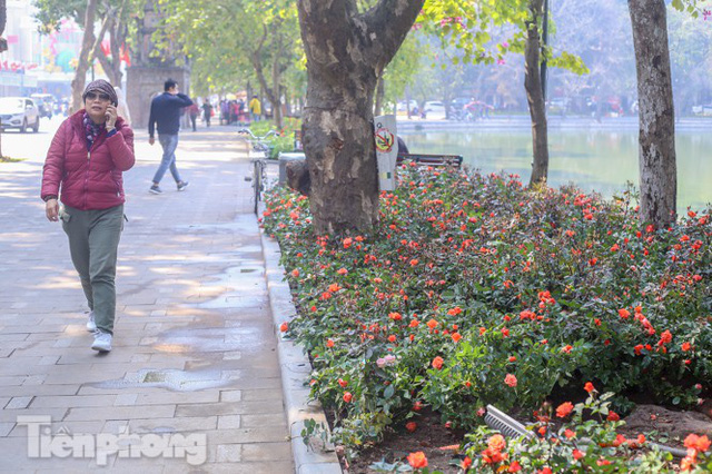 Hà Nội rực rỡ hoa chào mừng Đại hội Đảng lần thứ XIII - Ảnh 6.