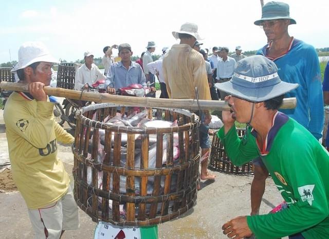 Nhiều chông gai cho xuất khẩu cá tra - Ảnh 1.