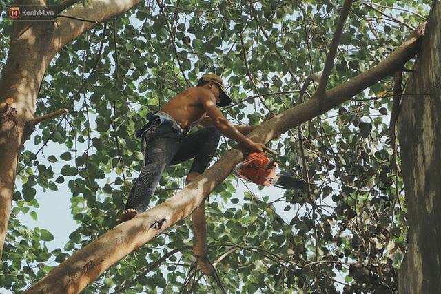 Gặp vua khỉ U50 ở miền Tây: 27 năm thích leo trèo, dù bị ong chích, kiến đốt đến phát sốt vẫn thấy bình thường - Ảnh 12.
