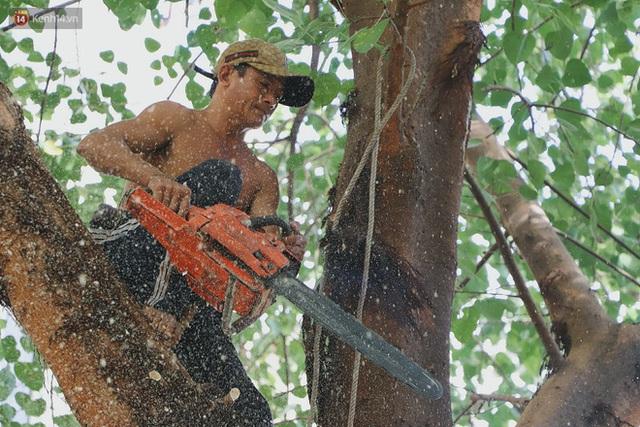 Gặp vua khỉ U50 ở miền Tây: 27 năm thích leo trèo, dù bị ong chích, kiến đốt đến phát sốt vẫn thấy bình thường - Ảnh 16.