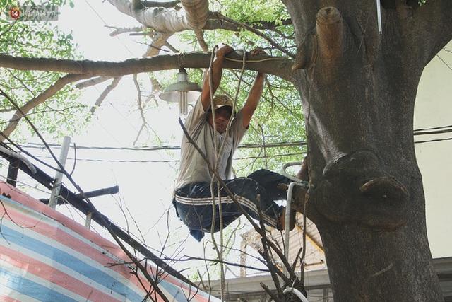 Gặp vua khỉ U50 ở miền Tây: 27 năm thích leo trèo, dù bị ong chích, kiến đốt đến phát sốt vẫn thấy bình thường - Ảnh 7.