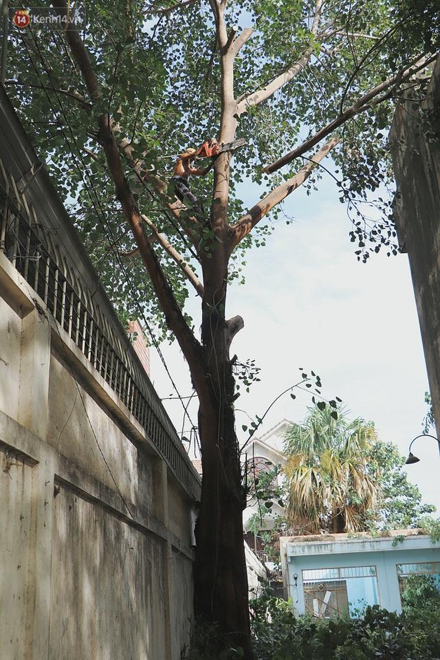 Gặp vua khỉ U50 ở miền Tây: 27 năm thích leo trèo, dù bị ong chích, kiến đốt đến phát sốt vẫn thấy bình thường - Ảnh 10.