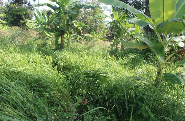 Tiến sĩ về làm nông dân: Hồi sinh đồi đá trơ trọi nhờ cỏ dại, trồng cacao không hoá chất tạo dòng socola đắt nhất Việt Nam - Ảnh 4.