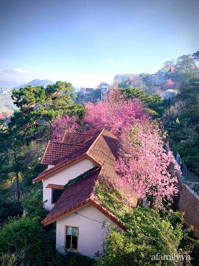 Ngôi nhà nhỏ yên bình sở hữu khu vườn đẹp như xứ sở thần tiên giữa lưng chừng đồi ở Đà Lạt - Ảnh 17.
