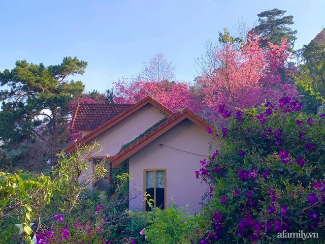 Ngôi nhà nhỏ yên bình sở hữu khu vườn đẹp như xứ sở thần tiên giữa lưng chừng đồi ở Đà Lạt - Ảnh 23.