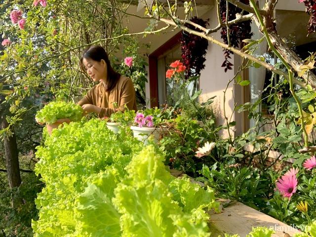 Ngôi nhà nhỏ yên bình sở hữu khu vườn đẹp như xứ sở thần tiên giữa lưng chừng đồi ở Đà Lạt - Ảnh 28.