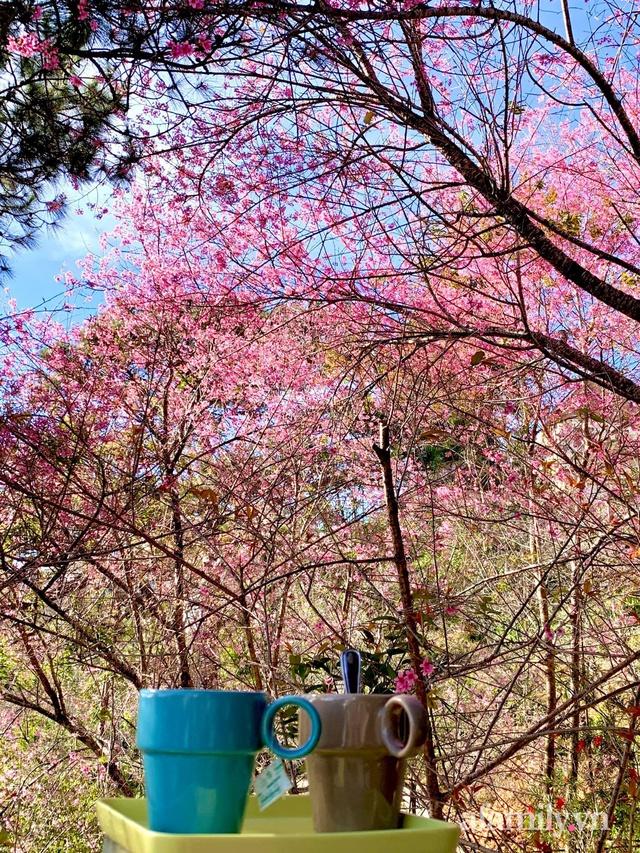 Ngôi nhà nhỏ yên bình sở hữu khu vườn đẹp như xứ sở thần tiên giữa lưng chừng đồi ở Đà Lạt - Ảnh 30.
