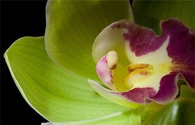 8 loại hoa lan đắt tiền nhất trên thế giới, có cây lên tới hơn 4 tỷ đồng - Ảnh 1.