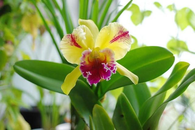 8 loại hoa lan đắt tiền nhất trên thế giới, có cây lên tới hơn 4 tỷ đồng - Ảnh 2.