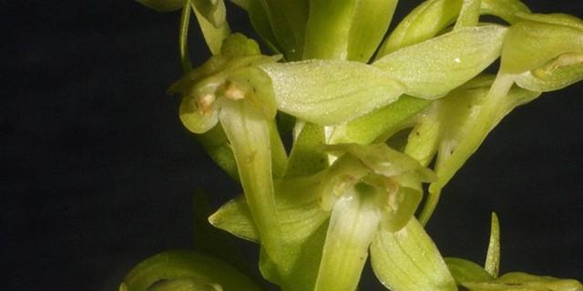 8 loại hoa lan đắt tiền nhất trên thế giới, có cây lên tới hơn 4 tỷ đồng - Ảnh 11.