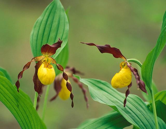 8 loại hoa lan đắt tiền nhất trên thế giới, có cây lên tới hơn 4 tỷ đồng - Ảnh 13.