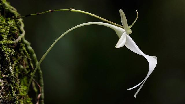 8 loại hoa lan đắt tiền nhất trên thế giới, có cây lên tới hơn 4 tỷ đồng - Ảnh 14.