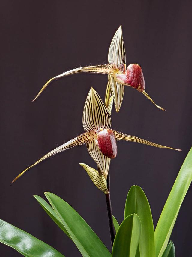 8 loại hoa lan đắt tiền nhất trên thế giới, có cây lên tới hơn 4 tỷ đồng - Ảnh 3.