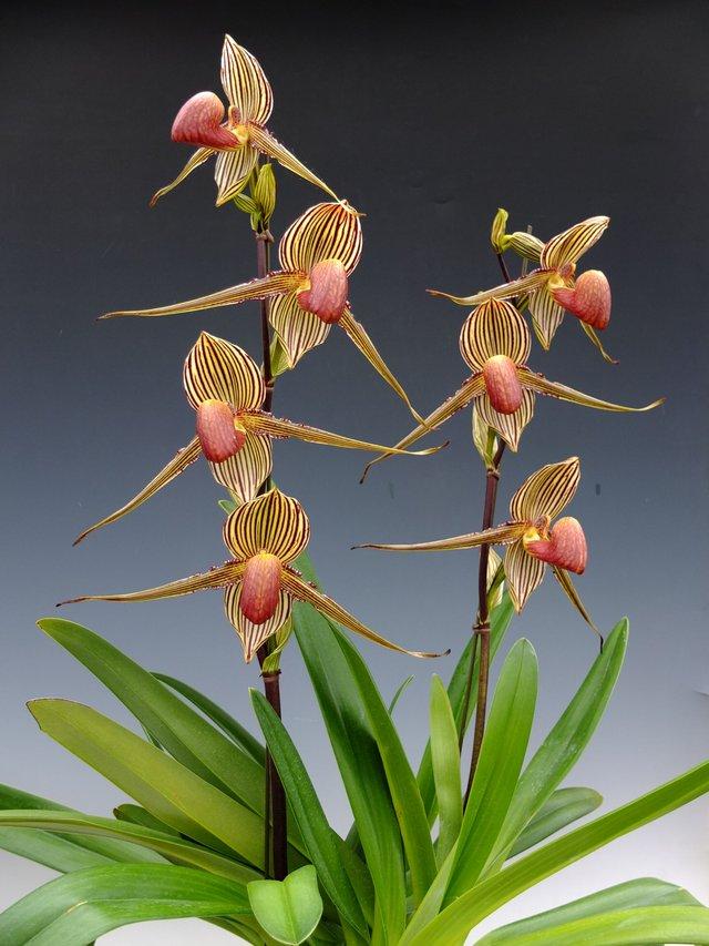 8 loại hoa lan đắt tiền nhất trên thế giới, có cây lên tới hơn 4 tỷ đồng - Ảnh 4.