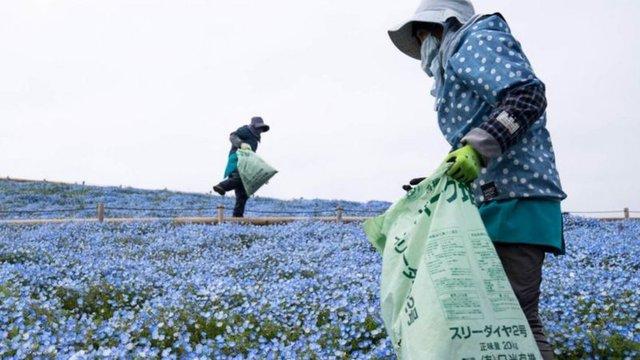 Ngành công nghiệp hoa toàn cầu tơi tả vì Covid-19 - Ảnh 1.
