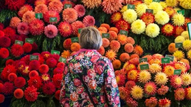 Ngành công nghiệp hoa toàn cầu tơi tả vì Covid-19 - Ảnh 5.