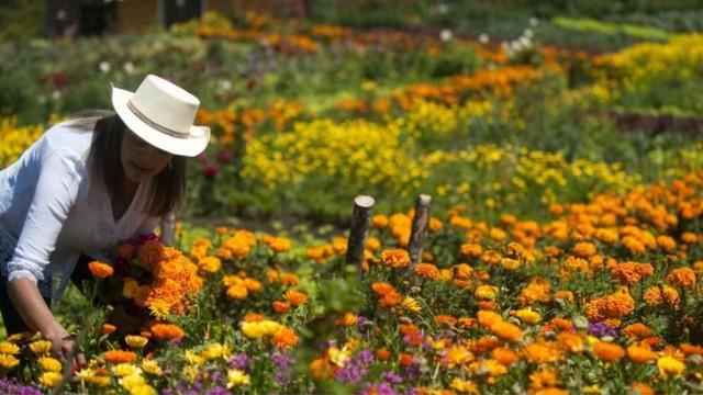 Ngành công nghiệp hoa toàn cầu tơi tả vì Covid-19 - Ảnh 6.