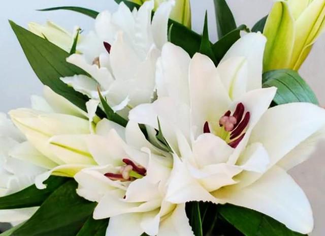 Đà Lạt tung ra thị trường nhiều giống hoa độc, lạ dịp Tết Nguyên đán - Ảnh 4.