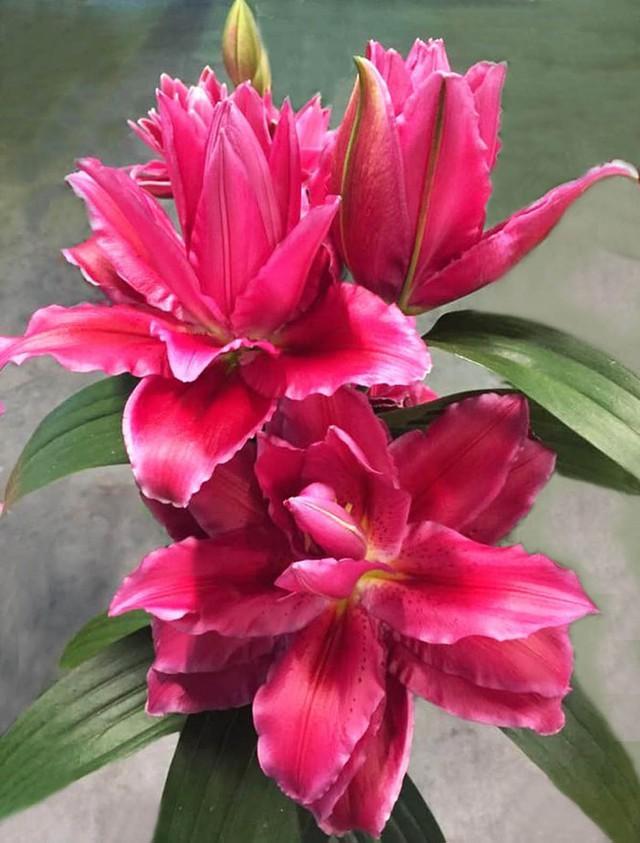 Đà Lạt tung ra thị trường nhiều giống hoa độc, lạ dịp Tết Nguyên đán - Ảnh 5.