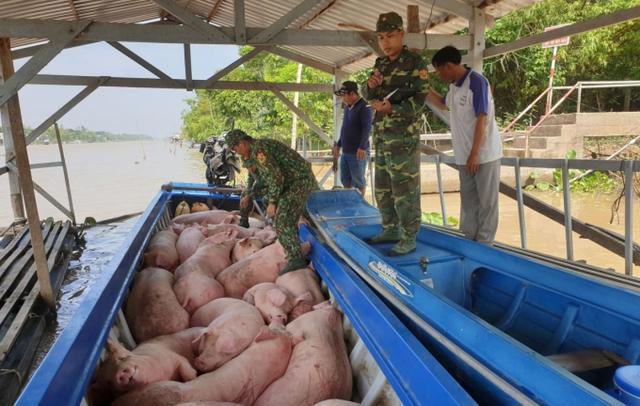 Làm rõ việc xuất lậu lợn và các sản phẩm từ lợn qua biên giới - Ảnh 1.