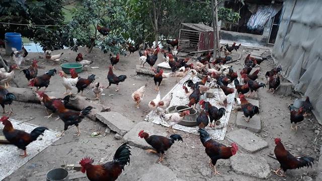 7 bí quyết chi tiêu thực phẩm Tết tiết kiệm, dù nhà có 12 người cũng ăn Tết không quá 5 triệu đồng của mẹ đảm ở Hà Nội - Ảnh 1.