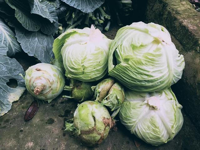 7 bí quyết chi tiêu thực phẩm Tết tiết kiệm, dù nhà có 12 người cũng ăn Tết không quá 5 triệu đồng của mẹ đảm ở Hà Nội - Ảnh 2.