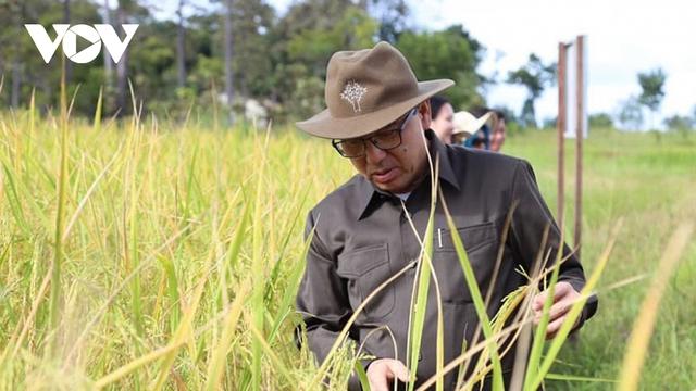 Campuchia xuất khẩu gạo tăng mạnh trong năm 2020 - Ảnh 1.