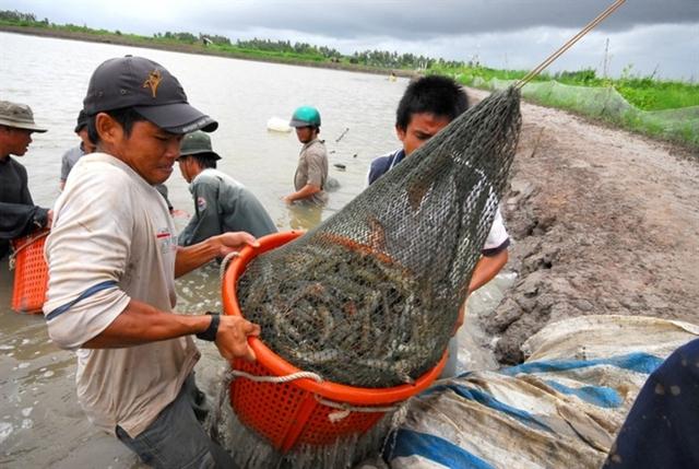 Giải mã thành công của con tôm Việt Nam và mục tiêu xuất khẩu 4 tỷ USD năm 2021  - Ảnh 1.
