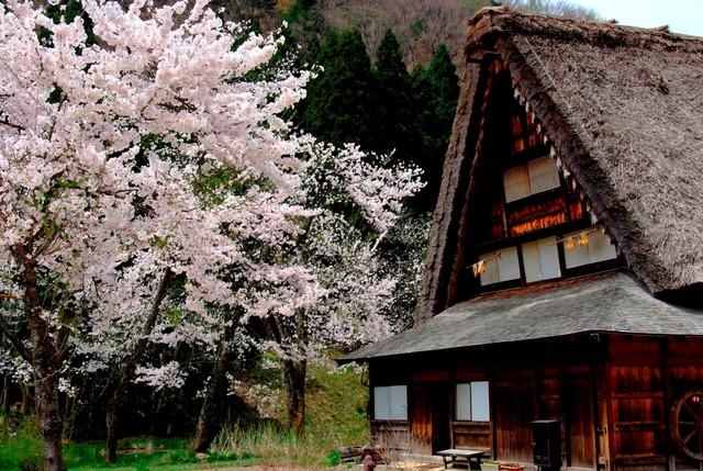 Ngẩn ngơ trước sự quyến rũ của những ngôi nhà mái dốc thuộc ngôi làng đẹp nhất Nhật Bản - Ảnh 39.