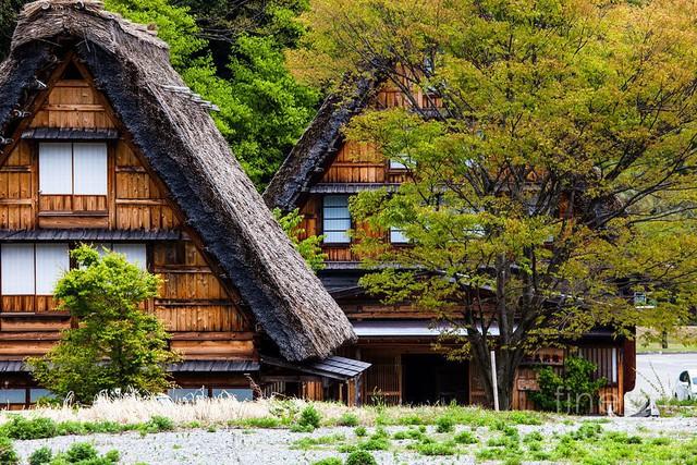 Ngẩn ngơ trước sự quyến rũ của những ngôi nhà mái dốc thuộc ngôi làng đẹp nhất Nhật Bản - Ảnh 5.