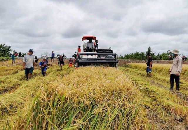 Giá gạo xuất khẩu của Việt Nam tăng mạnh trở lại, vượt gạo Thái Lan  - Ảnh 1.