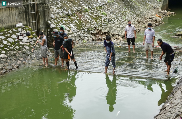 Nước sông Tô Lịch bỗng chuyển màu xanh ngắt hiếm thấy, người dân hân hoan bắt hàng tạ cá - Ảnh 2.