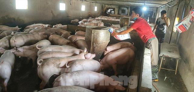 Giá lợn tụt dốc không phanh, cách nào ứng cứu? - Ảnh 1.