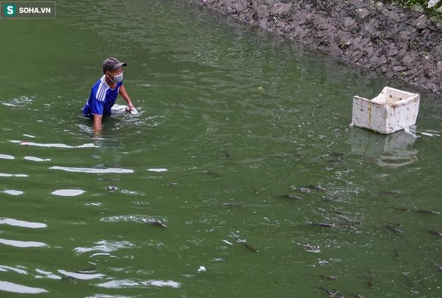 Nước sông Tô Lịch bỗng chuyển màu xanh ngắt hiếm thấy, người dân hân hoan bắt hàng tạ cá - Ảnh 3.
