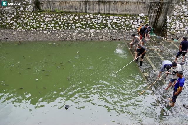 Nước sông Tô Lịch bỗng chuyển màu xanh ngắt hiếm thấy, người dân hân hoan bắt hàng tạ cá - Ảnh 6.