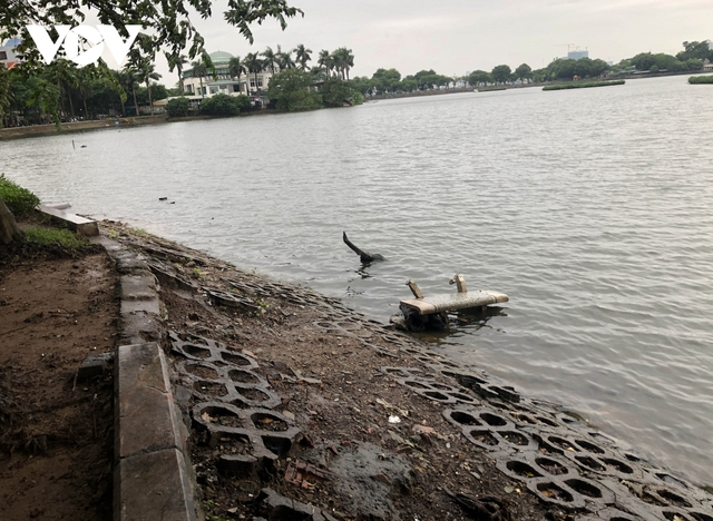 Bờ hồ Trúc Bạch giữa Hà Nội hư hỏng, nhếch nhác gây mất mỹ quan đô thị  - Ảnh 9.