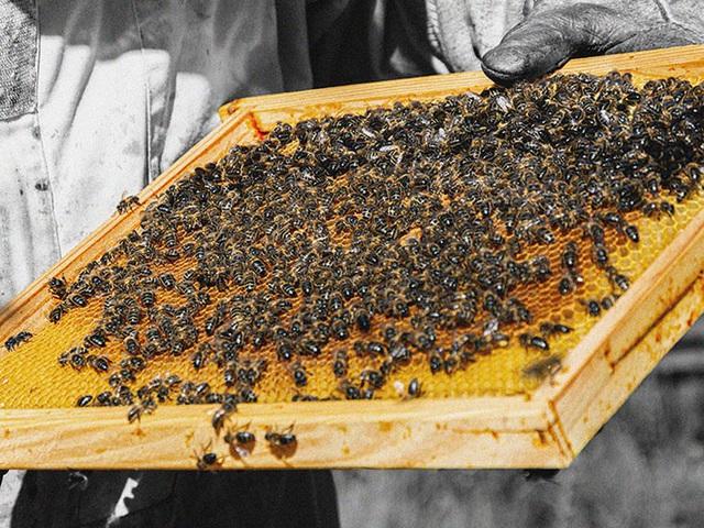 Không phải mật ong, đây mới là thứ được lấy ra từ tổ ong vừa giúp trị bệnh lại làm đẹp vô cùng hiệu quả mà nhiều người không hay biết - Ảnh 1.