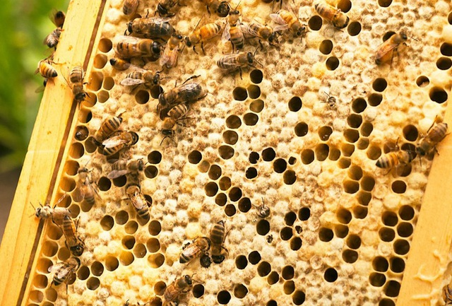 Không phải mật ong, đây mới là thứ được lấy ra từ tổ ong vừa giúp trị bệnh lại làm đẹp vô cùng hiệu quả mà nhiều người không hay biết - Ảnh 2.