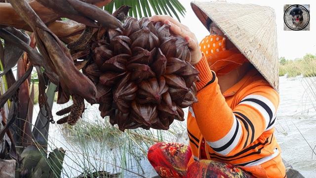 Loại quả mọc đầy ở Việt Nam nhưng lại là thực vật cấp quốc gia của Trung Quốc, được bảo tồn vì sắp... tuyệt chủng? - Ảnh 2.