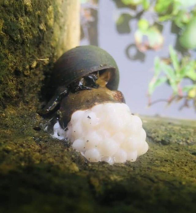 Nuôi loài đen xì, ăn mít chín, nhặt trứng đem bán, mỗi tháng ung dung đút túi cả trăm triệu - Ảnh 2.