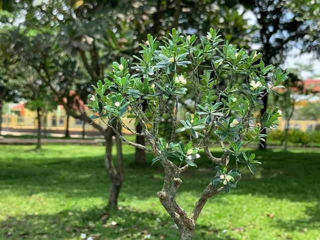 Nghỉ dịch ở nhà, chàng phụ hồ trổ tài làm cả vườn cây xanh từ giấy, dây thép: Tác phẩm khiến nhiều người nể - Ảnh 9.