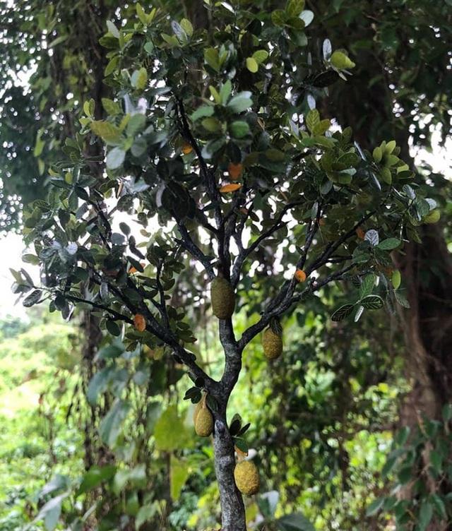Nghỉ dịch ở nhà, chàng phụ hồ trổ tài làm cả vườn cây xanh từ giấy, dây thép: Tác phẩm khiến nhiều người nể - Ảnh 10.