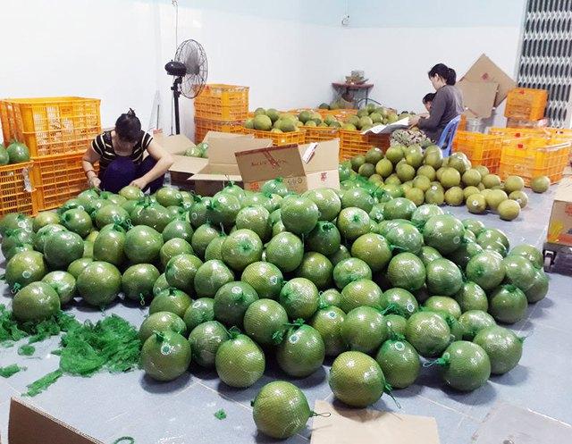 Đặc sản bưởi da xanh, chôm chôm… miền Tây giảm 40-50%, giá chỉ từ 6.000/kg - Ảnh 1.