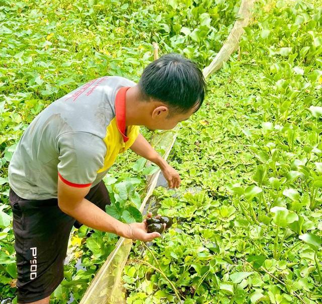 Chàng trai xứ voi thu nhập trăm triệu đồng mỗi năm nhờ nuôi ốc nhồi - Ảnh 1.