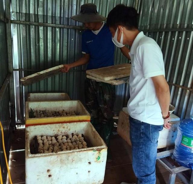 Chàng trai xứ voi thu nhập trăm triệu đồng mỗi năm nhờ nuôi ốc nhồi - Ảnh 5.