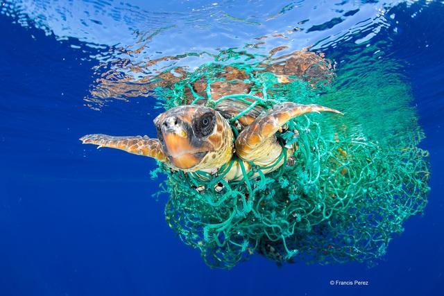 4 việc bạn có thể làm ngay hôm nay để giảm rác thải nhựa, giúp môi trường thiên nhiên thêm trong sạch  - Ảnh 1.