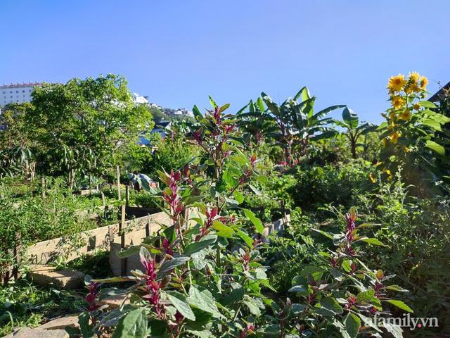 Cô gái dừng học đại học, về quê trồng cây trong khu vườn rộng 7000m² đẹp mê mẩn ở trung tâm thành phố Đà Lạt - Ảnh 12.