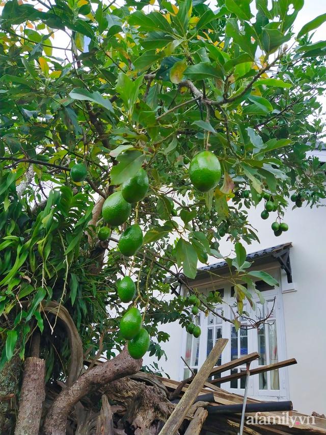 Cô gái dừng học đại học, về quê trồng cây trong khu vườn rộng 7000m² đẹp mê mẩn ở trung tâm thành phố Đà Lạt - Ảnh 7.