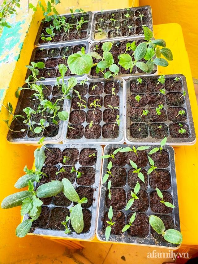 Cô gái dừng học đại học, về quê trồng cây trong khu vườn rộng 7000m² đẹp mê mẩn ở trung tâm thành phố Đà Lạt - Ảnh 10.