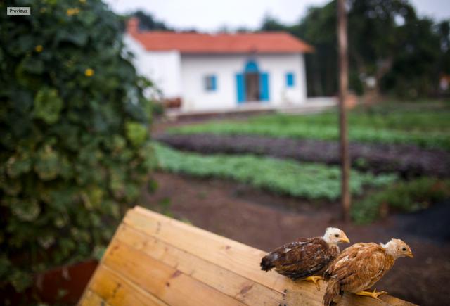Về quê trốn dịch, nữ nhiếp ảnh mua hơn 1ha đất làm vườn, bất ngờ kiếm tiền tỷ từ sốt đất vùng ven - Ảnh 4.